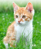 Young cat in the grass Royalty Free Stock Photography