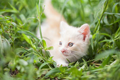 Young cat in  grass Royalty Free Stock Photography