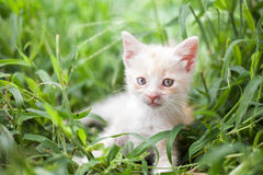 Young cat in  grass Royalty Free Stock Photos