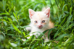 Young cat in  grass Stock Image