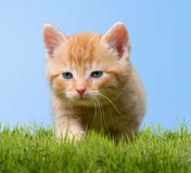 Young cat on green meadow Royalty Free Stock Photos