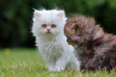 Young cat, green outdoor Stock Image