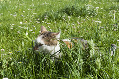 Young cat hides between high fresh green grass Stock Photos
