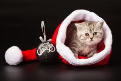Young cat inside Santa hat royalty free stock images