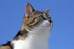 Young cat investigates the world Stock Image