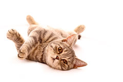 Young cat isolated Stock Photo