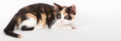 Young cat isolated on white Royalty Free Stock Photography