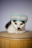 Young cat with jamaica style hat. Funny young cat wearing a hat and resting on a stool Royalty Free Stock Photography