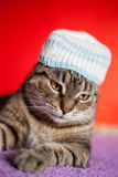 Young cat with jamaica style hat. Funny cat wearing a hat and resting on a sofa Stock Photography