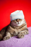 Young cat with jamaica style hat. Funny cat wearing a hat and resting on a sofa Stock Photo