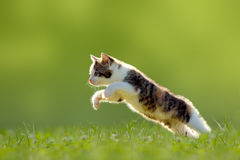 Young cat jumps over a meadow backlit royalty free stock photography