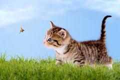 Young cat with ladybug on a green field stock image