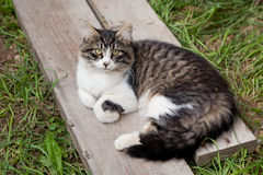 Young Cat Laying Outside Royalty Free Stock Images