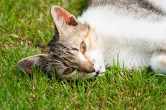 A young cat lies on the grass, rests and plays. A young cat lies on the grass, rests and play stock images