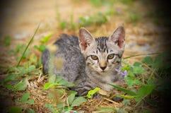 Young cat. Stock Photos