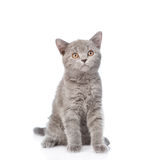 Young cat looking up. isolated on white background Royalty Free Stock Image