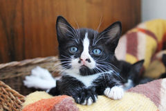 Young cat. The cat looks a little confused Stock Image