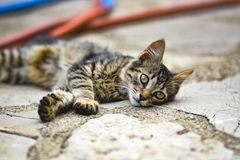 Young cat lying on the sidewalk on a hot day royalty free stock image