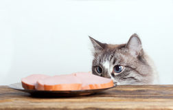Young cat near the a plate stock image