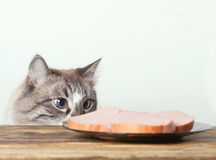 Young cat near the a plate stock photos