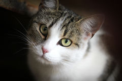 Young cat. Nice cat in the barn Royalty Free Stock Images