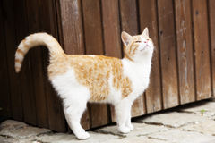 Young cat outside Stock Photo