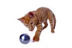 Young cat playing with a ball. Red tomcat play with a metal bullet Royalty Free Stock Photography