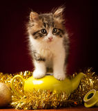 Young cat playing with christmas ornaments Stock Photo