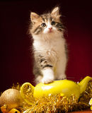 Young cat playing with christmas ornaments Royalty Free Stock Photos