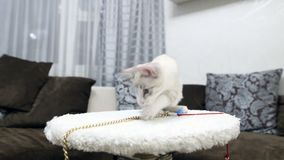 A young cat is playing with a claw post. A young cat is playing with a claw post stock video