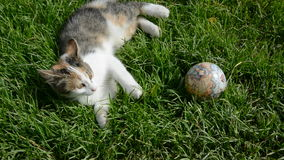 Young cat playing with earth globe on grass stock footage