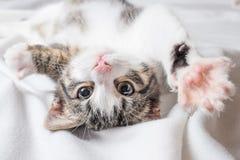 Young cat playing stock photos