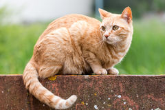 Young cat Royalty Free Stock Photo