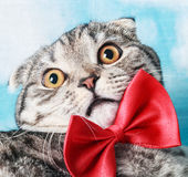 Young cat in a red bow tie Stock Photo