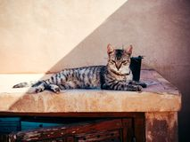 Young cat relaxing and lying in the sun royalty free stock images