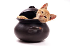 Young cat resting in a clay pan Royalty Free Stock Image