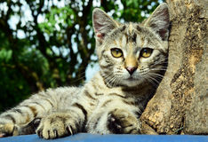 Young cat resting outdoors Stock Photo