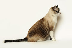 Young Cat sitting Stock Images