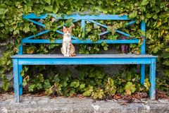 Young cat sitting on a painted wooden bench. In front of a house overgrown with vine leaves Stock Photos