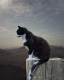 Young cat sitting on a piece of old wood. Landscape in background Royalty Free Stock Photography