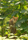 Young cat sitting on the stake. In green garden Royalty Free Stock Photo