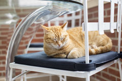Young cat sleeping  on chair Royalty Free Stock Image