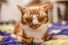 A young cat sleeping on a couch at home, sweet and beautiful. royalty free stock photos