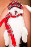 Young cat sleeping on its owners laps. Funny looking cat wearing a hat and a scarf Stock Photography