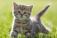 Young cat standing in green grass Stock Photos