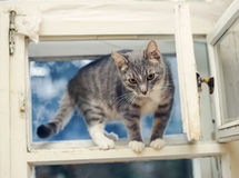 Young cat standing on an open old ventilator window Royalty Free Stock Photo