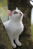 YOUNG CAT IN TREE Royalty Free Stock Photography