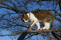 Young cat on the tree Stock Photo