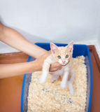 Young cat use the toilet Stock Photography