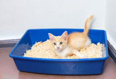 Young cat use the toilet Royalty Free Stock Images